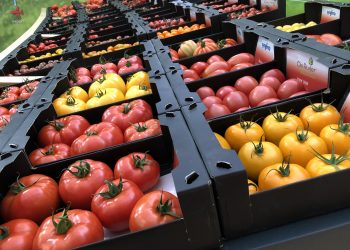 Boxes containing different coloured tomatoes neatly arranged